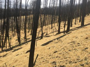 Restoration efforts at the 2017 Brian Head fire.