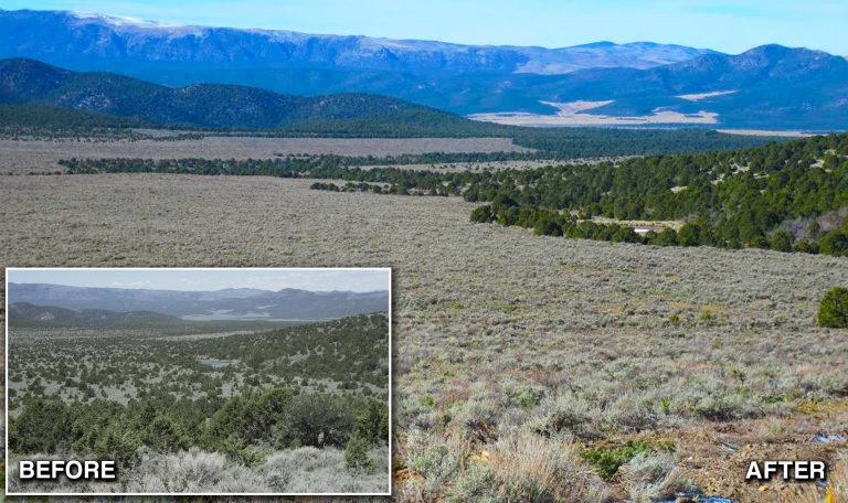 Watershed Restoration Initiative before and after project photo